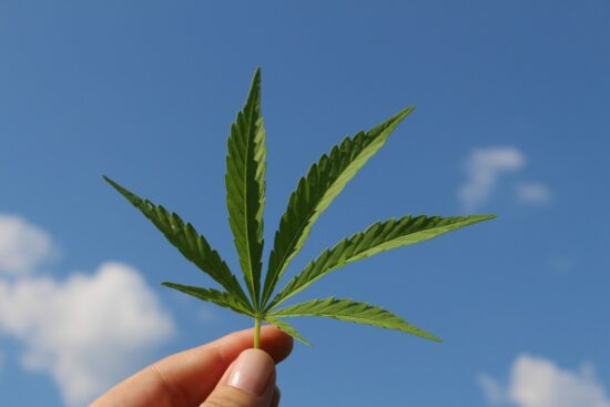 uber-cannabis